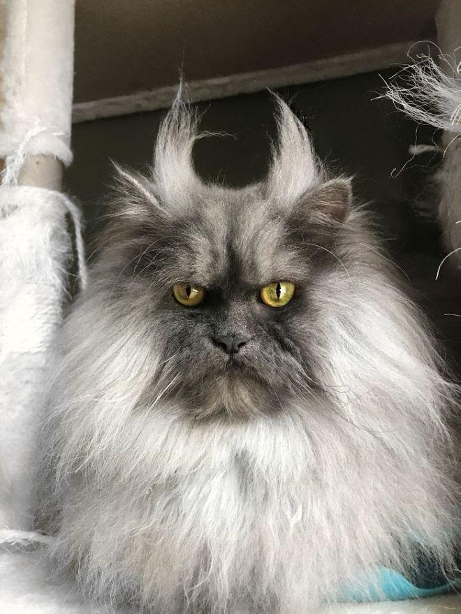 Meet Juno, The Angriest Cat On Instagram