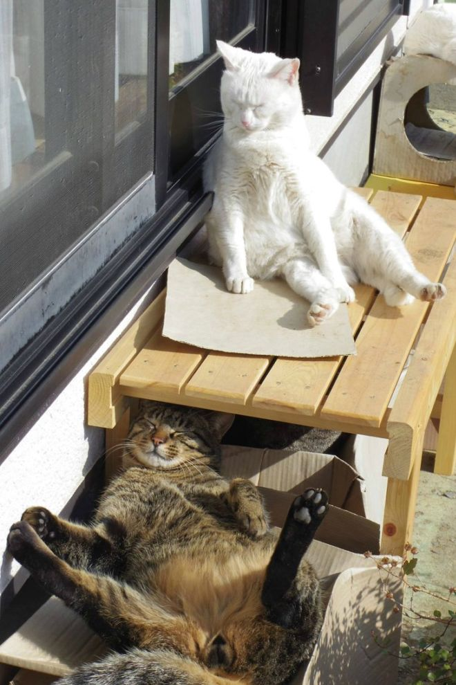 These Sun-Loving Cats Are Too Funny