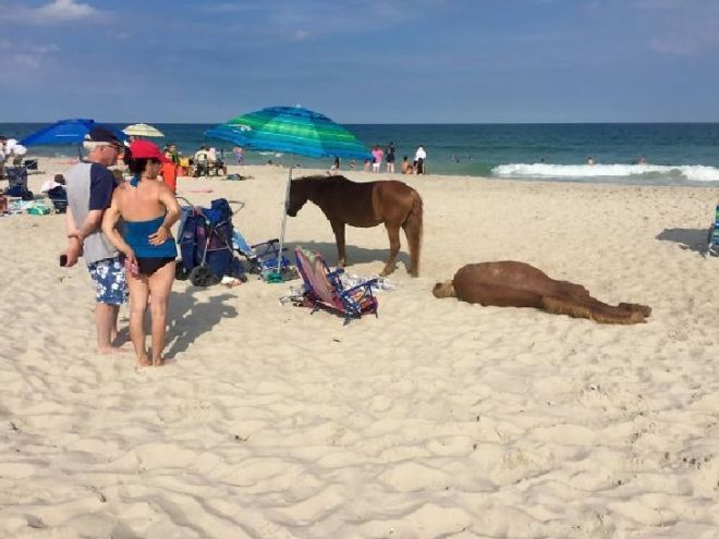 14 Craziest Things Than Can Happen At The Beach