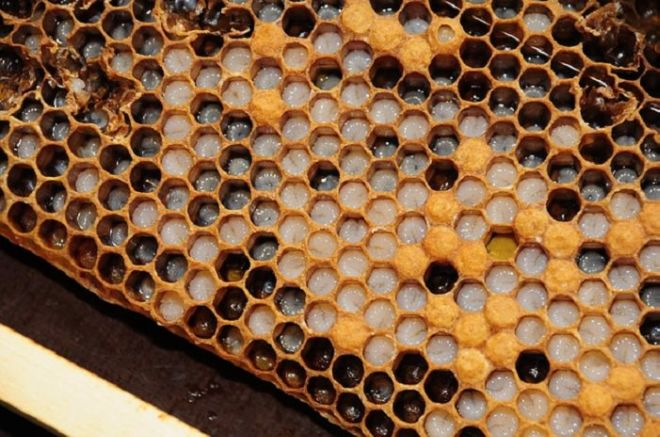10 Amazing Uses Of Honey You Never Knew About